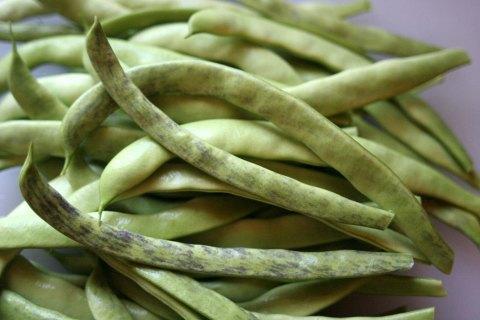beans7a