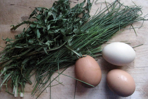 3 eggs, a bunch of foraged dandelion greens and wild chives